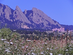 NCAR in the Flowers