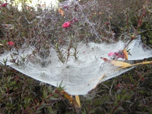 California Flower Web